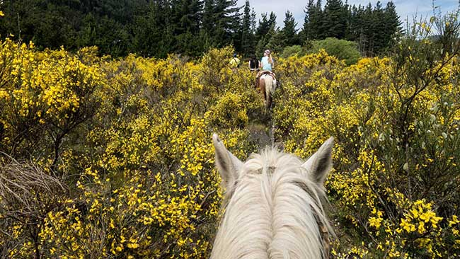 Horseback Mountain Trail Riding Montana Area